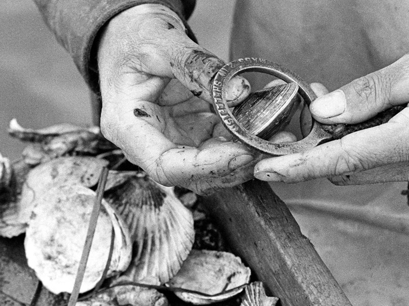 If the quohog – a variety of clam favored by seafood lovers – passes through the ring, a measuring device fishermen receive with their commercial license, then it's too small and has to be tossed back. <br />
